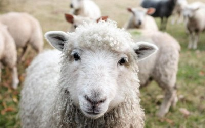 "Featured: ""Why Conscious Consumers Should Wear Wool"""